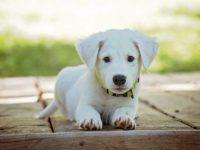 Comportementaliste canin : Quelles différence entre un dresseur de chiens et un comportementaliste canin ?